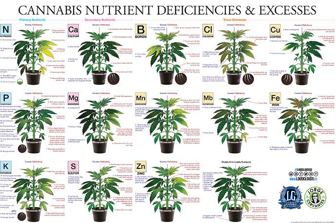 marijuana-deficiency-chart-jorge-cervantes